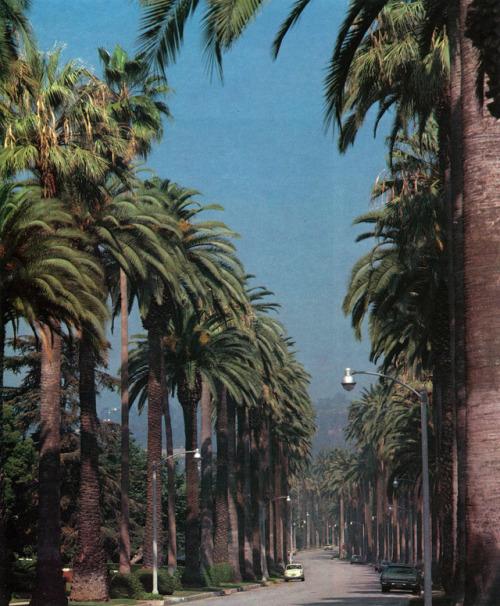 palm road